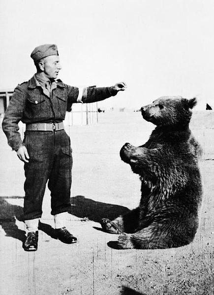 The Bear who Fought in World War II