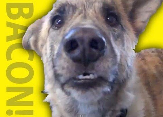 Ultimate Dog Tease - YouTube