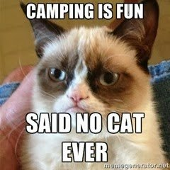Taking your cat camping:  6 things you need to think about |Go Camping Australia Blog