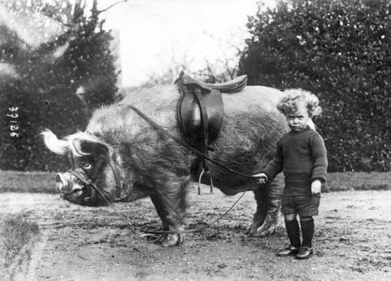 The Pig Rider