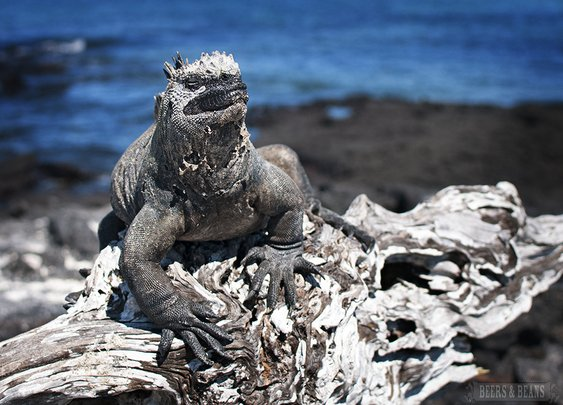 Galapagos Wildlife Travel: 4 Favorite Encounters