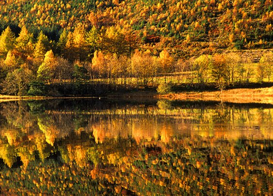 Fall Foliage Scenery - a gallery on Flickr