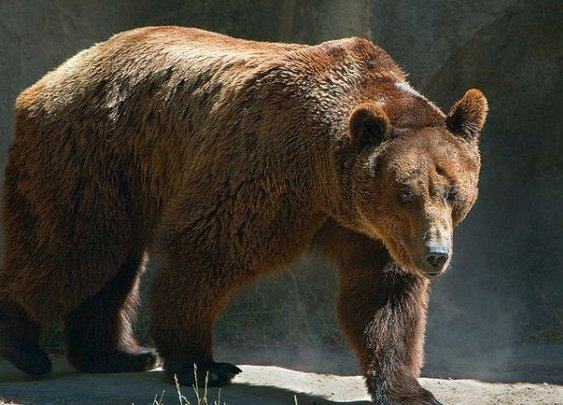 Bear Fights 80-Year Old Man in Hand-to-Paw Combat, Survives