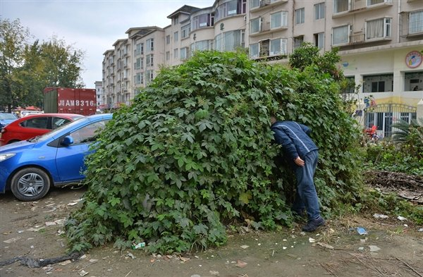 """Bizarre Chinese Ivy-Covered """"Zombie Car"""" Needs Water, Fertilizer, Brains"""