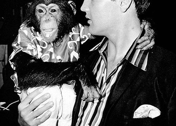 Scatter: the Story Of Elvis Presley's Pet Chimpanzee