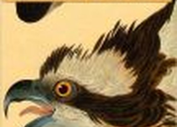 John James Audubon: The Making of an American by Richard Rhodes