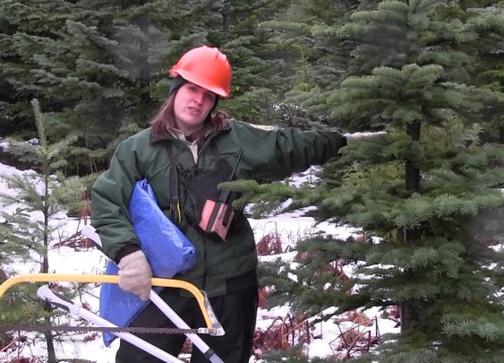 Tips for Successful Christmas Tree Hunting