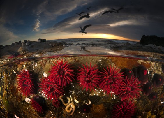2013 National Geographic Photo Contest - Photos