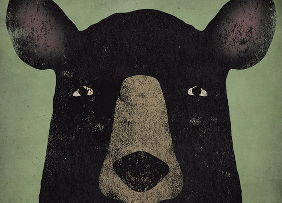 An Injured Bear Teaches About Our Relationship With Animals