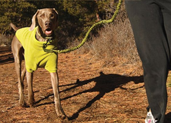 10 Rules: Running with your Dog