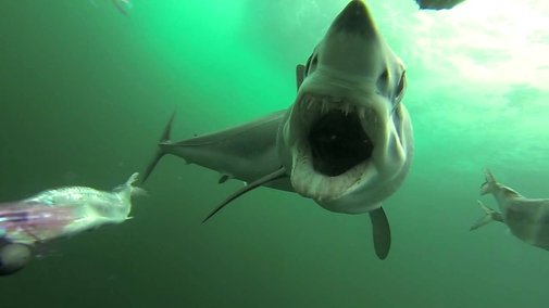 What a Shark Attack Looks Like Underwater