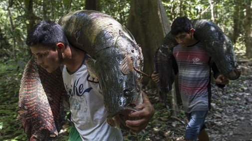 Fishing for Brazil's Fossils
