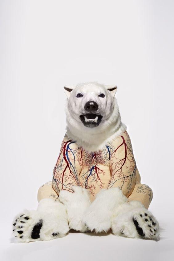 Sculpture Series Shows What Lies Beneath A Bear's Skin - Neatorama
