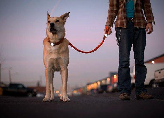 Guardian Dog Light