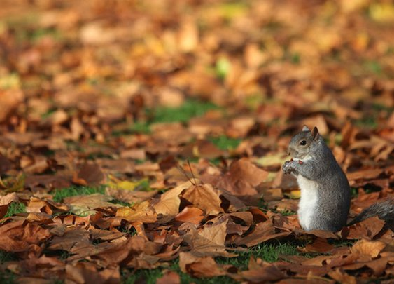 Why U.S. Parks Are Full of Squirrels