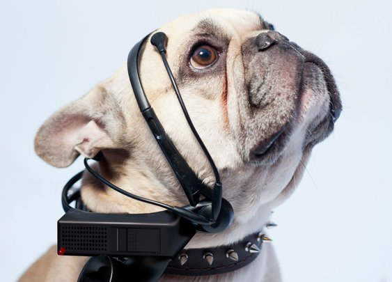 This Headset Reads Your Dog's Thoughts