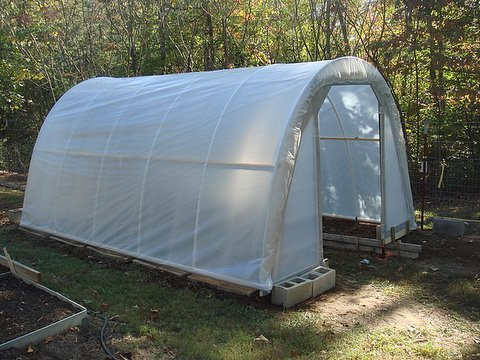 50 Dollar Greenhouse
