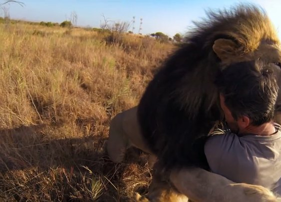 The Man Who Hugs Wild Lions Brought a Go-Pro This Time