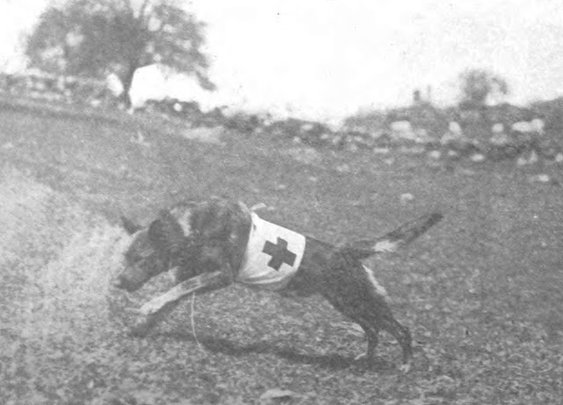 Heroic Dogs of WWI
