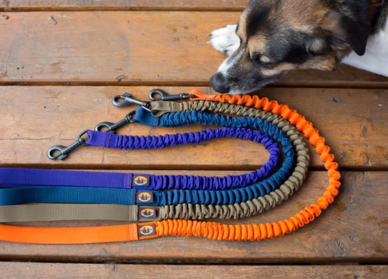 Bungee Dog Leash