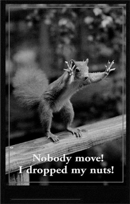 Nobody move, I dropped my Nuts ! | Ha Ha !!!