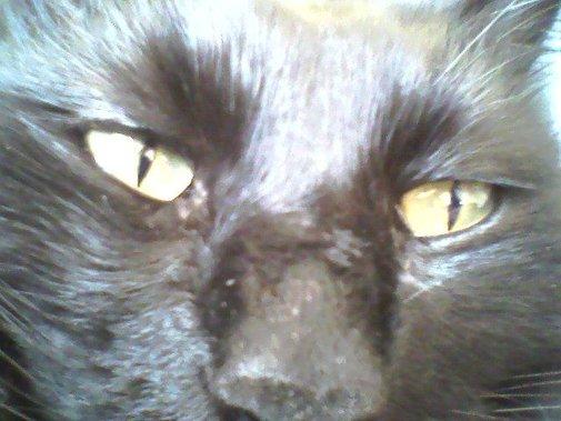 "Short Fiction: ""Black Cat, Black Night"" Read at ...   Fiction: 13 Cats"