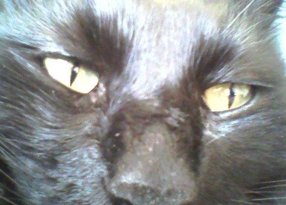 "Short Fiction: ""Black Cat, Black Night"" Read at ... | Fiction: 13 Cats"