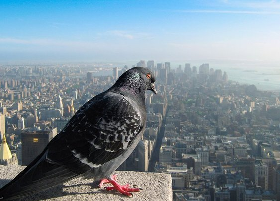 How Our World Would Look If You Were A Bird « PixTale   News stories in photographs from Around The World
