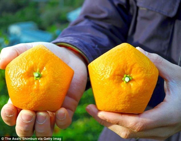 Pentagon shaped citrus fruit exists