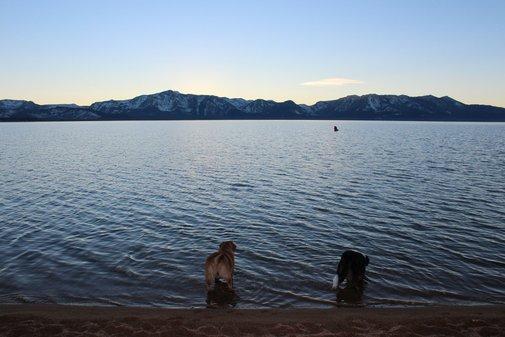 Sunset Beach Run + Skookum Dog