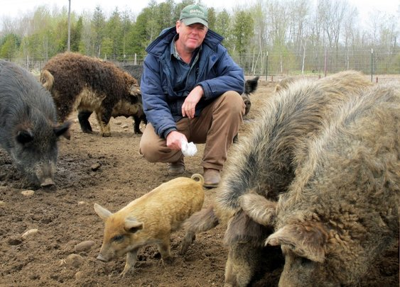 """Michigan farmer faces $700,000 in fines for raising """"wrong"""" breed of pigs"""