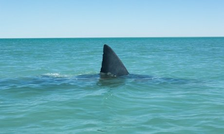 NZ man fights off shark, stitches up own leg, goes to the pub.
