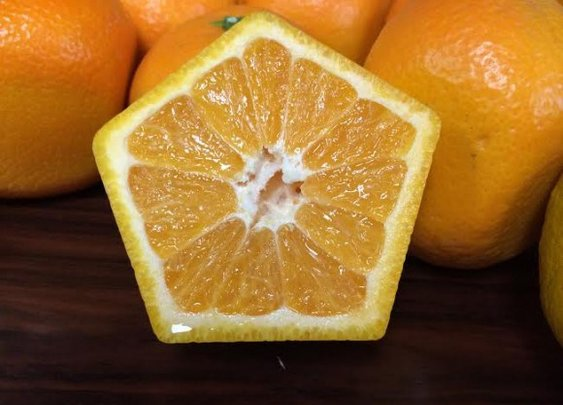Japanese Five-Sided Oranges Won't Roll Off The Table