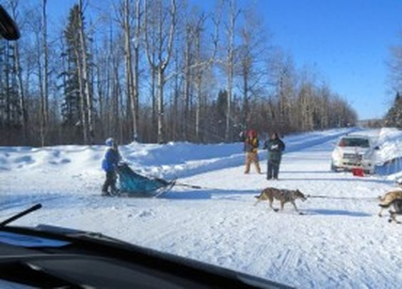 The Beargrease Dog Sled Marathon
