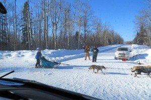 The Beargrease Dog Sled Marathon