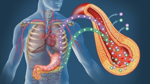 Producing insulin-secreting pancreas cells from skin cells gives hope to diabetics