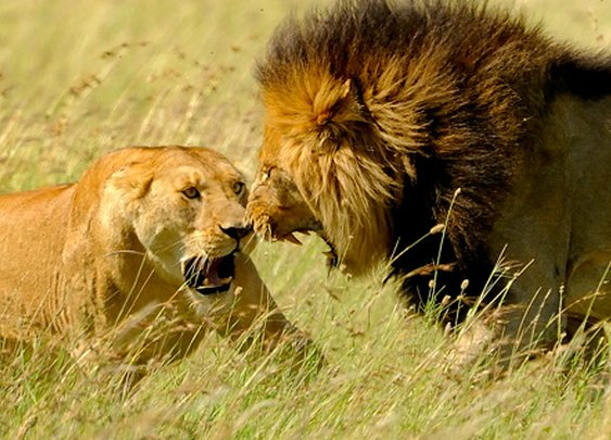 How The Big Five Made The Cut - Thomson Safaris