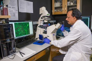 "Researchers Hijack Cancer Migration Mechanism to ""Move"" Brain Tumors"