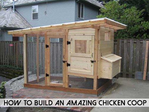 How To Build An Amazing Chicken Coop - SHTF Preparedness