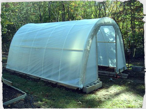 How to Build 50 Dollar Greenhouse - SHTF Preparedness