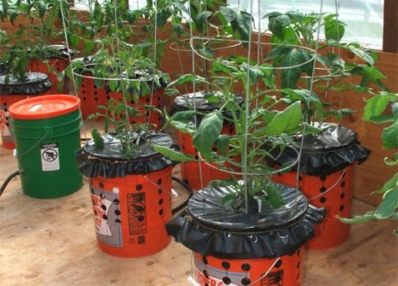 DIY Self Watering Alaska Grow Buckets - SHTF Preparedness