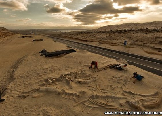 Chile's stunning fossil whale graveyard explained