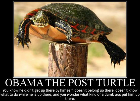 "Obama the ""Post Turtle"""