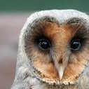This owl has been one our most popular pin - what do you think of it?