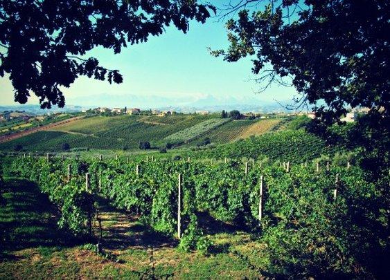 Montefalco Rosso: Vino from Italy's Most Under-Appreciated Wine Region