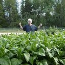 Why raise your own tobacco? - YouTube