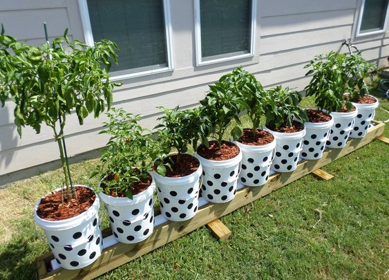 Amazing Container Gardening Learn About Cutting Edge