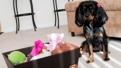Tidy Dog toy box encourages dogs to pick up after themselves