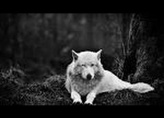 How Wolves Change Rivers , Full HD - YouTube