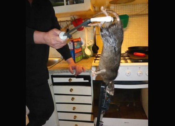 Family finds 15-inch 'monster' rat in kitchen